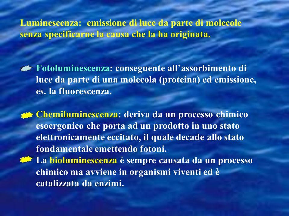 Organismi luminosi Batteri Dinoflagellati (alghe unicellulari) Radiolari (organismi unicellulari) Cnidari (meduse) Ctenofori (plancton gelatinoso) Nemertini Molluschi Nudibranchi (pochi) vongole (poche) calamaro (molti) Octopodi (pochi) Annelidi (molti) Polcheti Crustaci Copepodi Ostracodi Amfipodi Decapodi, Euphausiidi (krill) Chaetognati (arrow-worms; 1 specie) Echinodermi: stella di mare, cetriolo di mare, Hemichordati Urochordati Cordati: squali (alcuni) pesci (molti) Centopiedi Millepiedi Insetti: lucciole, maggiolino Funghi Collemboli Non esistono rettili, anfibi o mammiferi né piante da fiori luminosi
