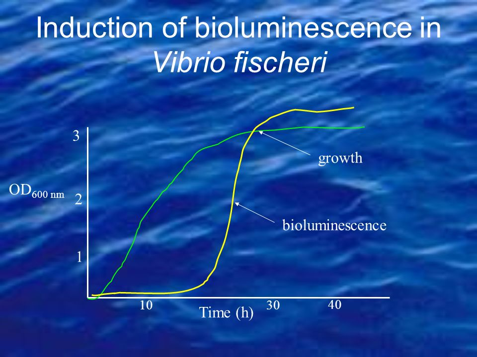 Induction of bioluminescence in Vibrio fischeri Time (h) OD 600 nm 1030 40 1 2 3 bioluminescence growth