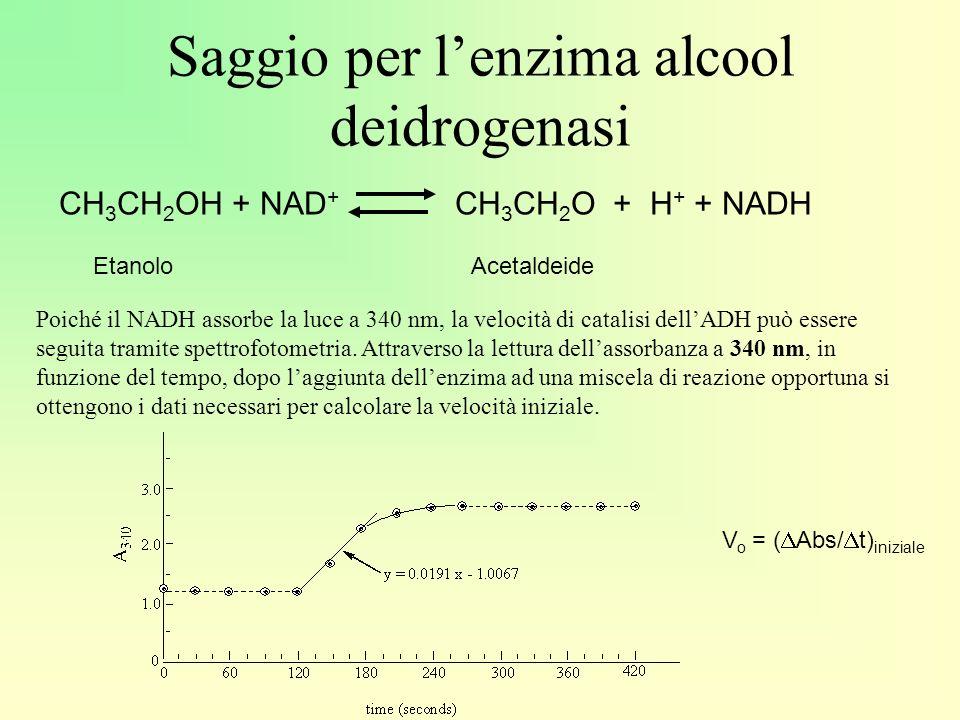 Saggio per lenzima alcool deidrogenasi CH 3 CH 2 OH + NAD + CH 3 CH 2 O + H + + NADH EtanoloAcetaldeide Poiché il NADH assorbe la luce a 340 nm, la velocità di catalisi dellADH può essere seguita tramite spettrofotometria.