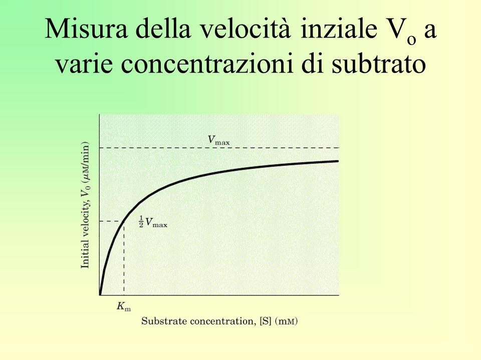 Misura della velocità inziale V o a varie concentrazioni di subtrato