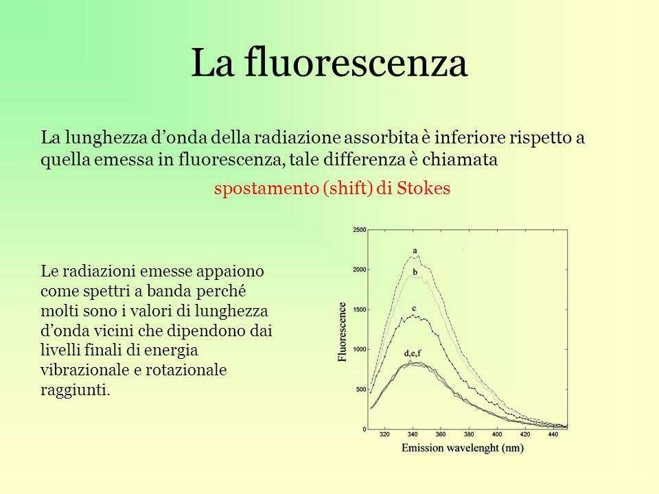 La fluorescenza La lunghezza donda della radiazione assorbita è inferiore rispetto a quella emessa in fluorescenza, tale differenza è chiamata spostamento (shift) di Stokes Le radiazioni emesse appaiono come spettri a banda perché molti sono i valori di lunghezza donda vicini che dipendono dai livelli finali di energia vibrazionale e rotazionale raggiunti.