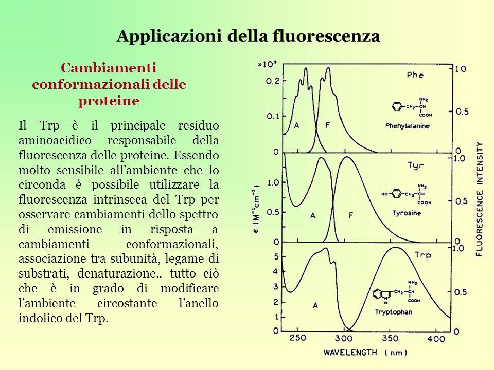 Applicazioni della fluorescenza Cambiamenti conformazionali delle proteine Il Trp è il principale residuo aminoacidico responsabile della fluorescenza delle proteine.