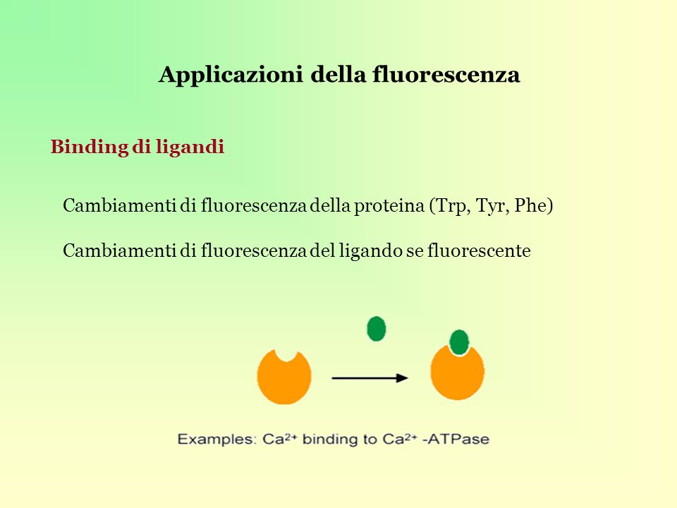 Applicazioni della fluorescenza Binding di ligandi Cambiamenti di fluorescenza della proteina (Trp, Tyr, Phe) Cambiamenti di fluorescenza del ligando se fluorescente