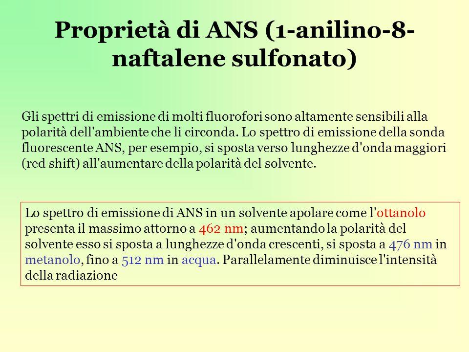 Proprietà di ANS (1-anilino-8- naftalene sulfonato) Gli spettri di emissione di molti fluorofori sono altamente sensibili alla polarità dell ambiente che li circonda.