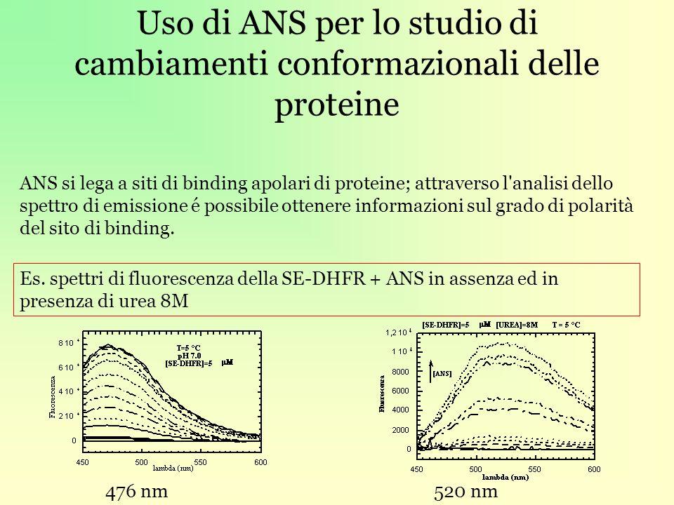 Uso di ANS per lo studio di cambiamenti conformazionali delle proteine ANS si lega a siti di binding apolari di proteine; attraverso l analisi dello spettro di emissione é possibile ottenere informazioni sul grado di polarità del sito di binding.