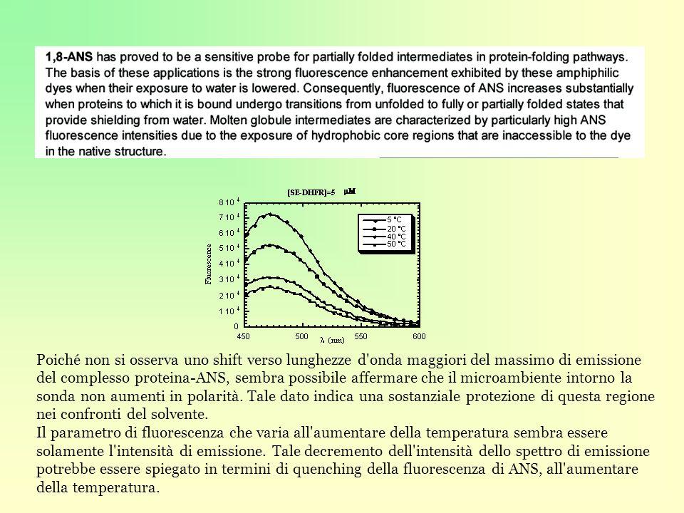 Poiché non si osserva uno shift verso lunghezze d onda maggiori del massimo di emissione del complesso proteina-ANS, sembra possibile affermare che il microambiente intorno la sonda non aumenti in polarità.