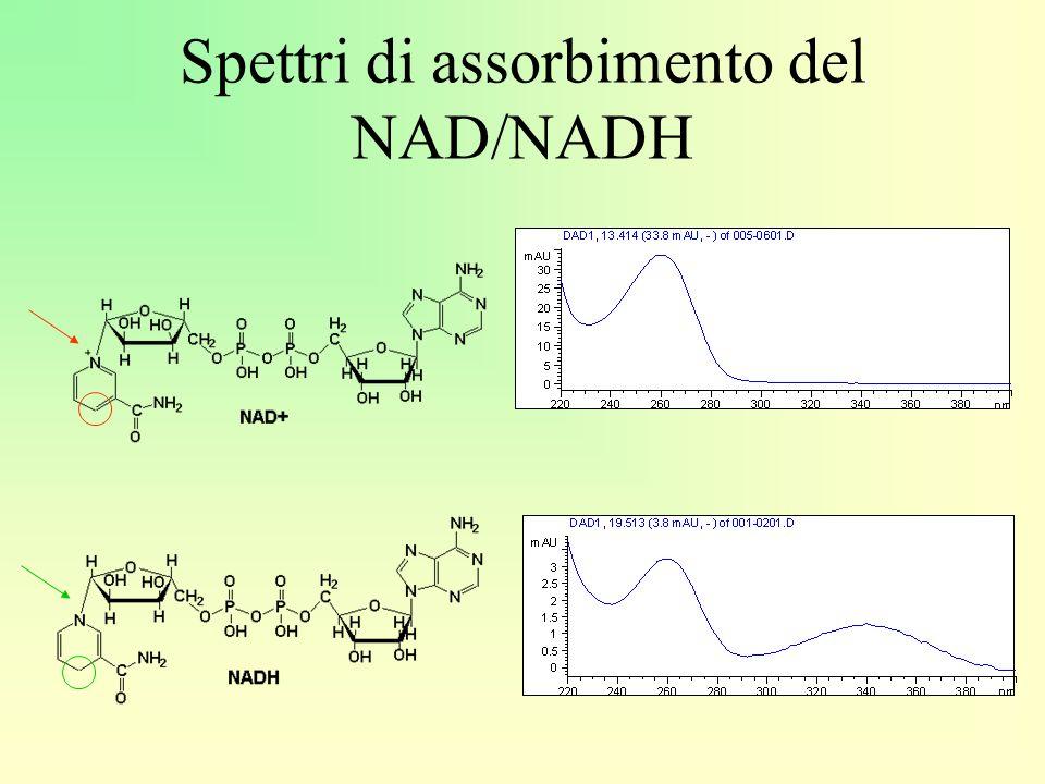 Spettri di assorbimento del NAD/NADH