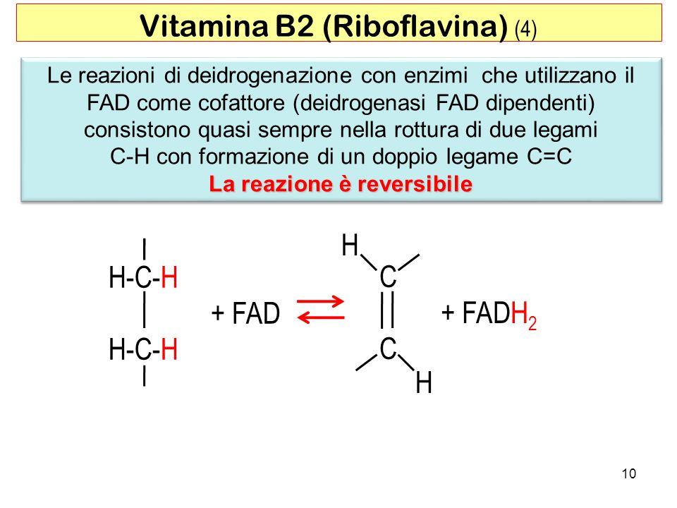 10 Le reazioni di deidrogenazione con enzimi che utilizzano il FAD come cofattore (deidrogenasi FAD dipendenti) consistono quasi sempre nella rottura