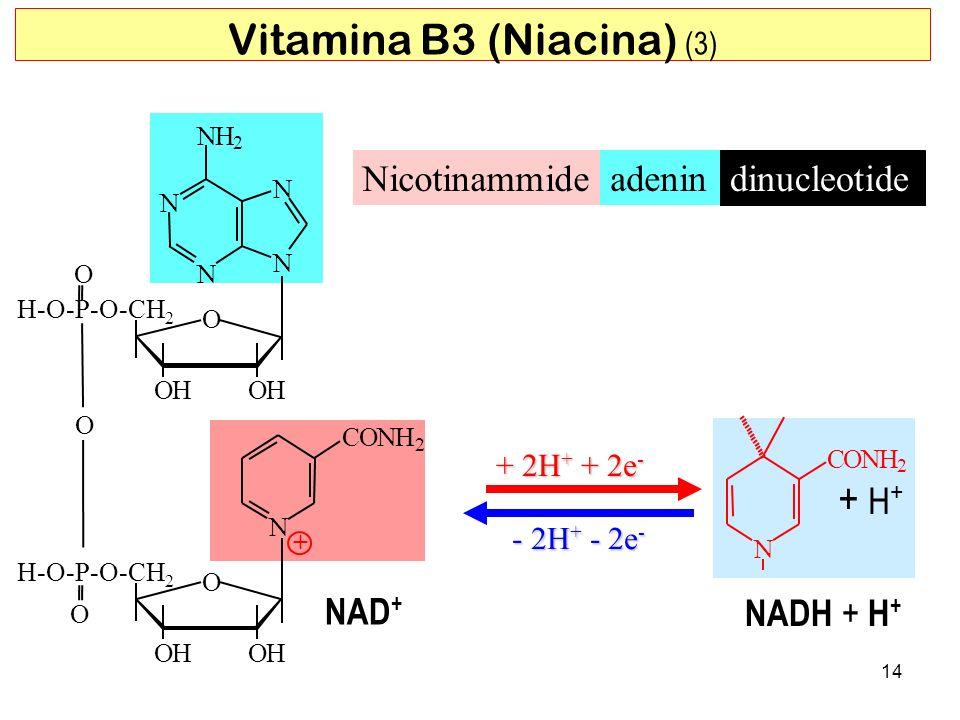 + H + O N CONH + 2 N CONH 2 + 2H + + 2e - - 2H + - 2e - dinucleotide Nicotinammideadenin 14 N NH 2 N N N O OHOH H-O-P-O-CH 2 O Vitamina B3 (Niacina) (