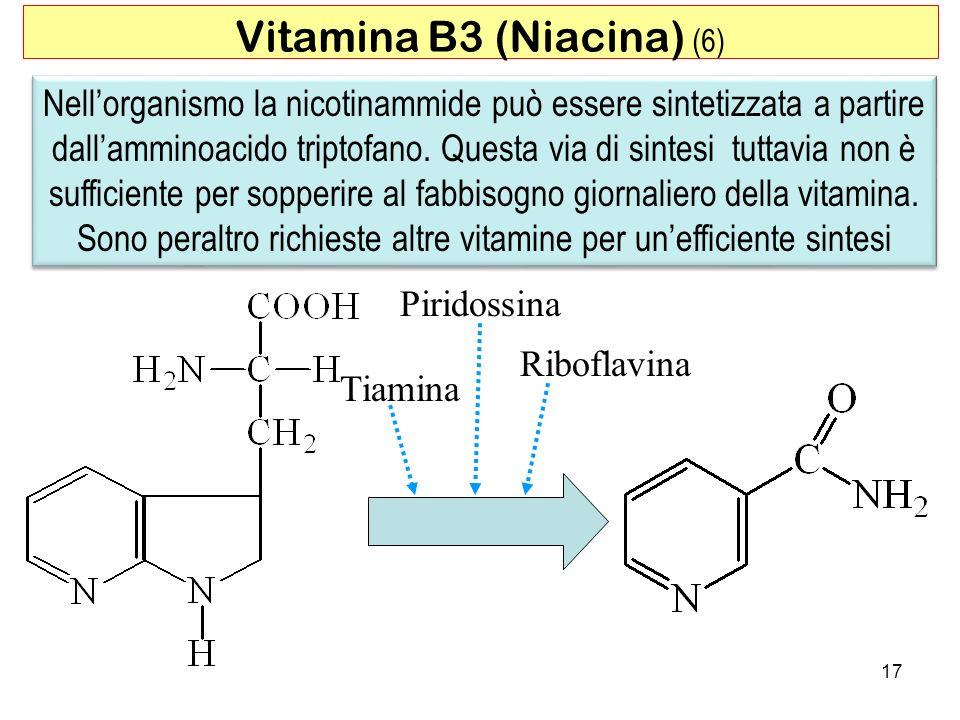 Nellorganismo la nicotinammide può essere sintetizzata a partire dallamminoacido triptofano. Questa via di sintesi tuttavia non è sufficiente per sopp