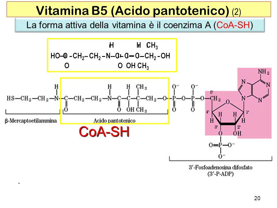 La forma attiva della vitamina è il coenzima A (CoA-SH) 20 Vitamina B5 (Acido pantotenico) (2) CoA-SH H H CH 3 HO– C -- CH 2 - - CH 2 - - N- -- C--- C