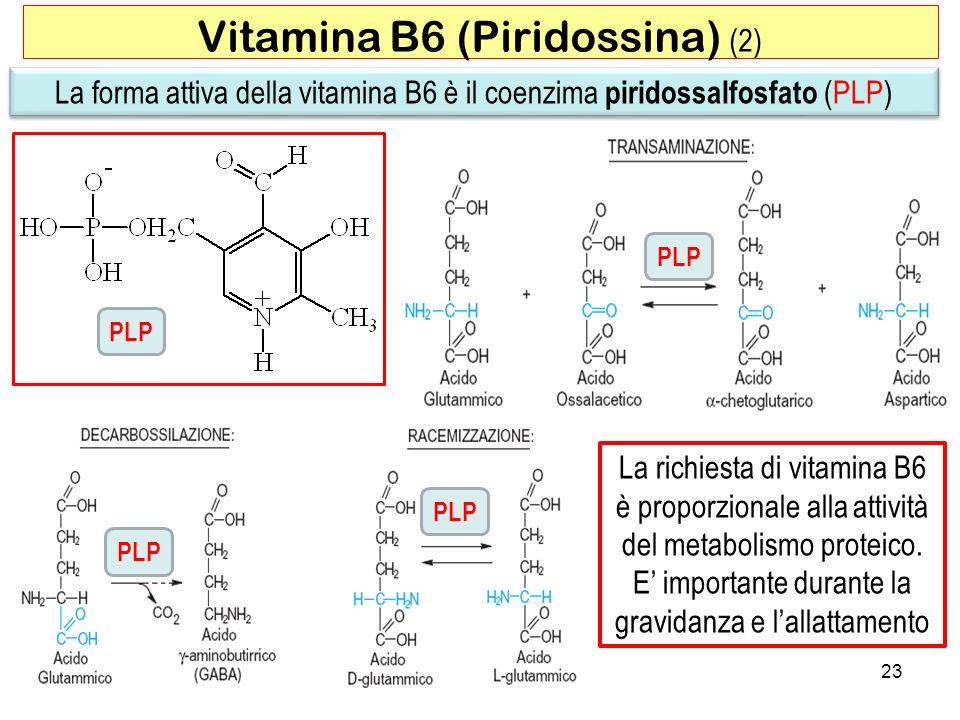 La richiesta di vitamina B6 è proporzionale alla attività del metabolismo proteico. E importante durante la gravidanza e lallattamento 23 Vitamina B6