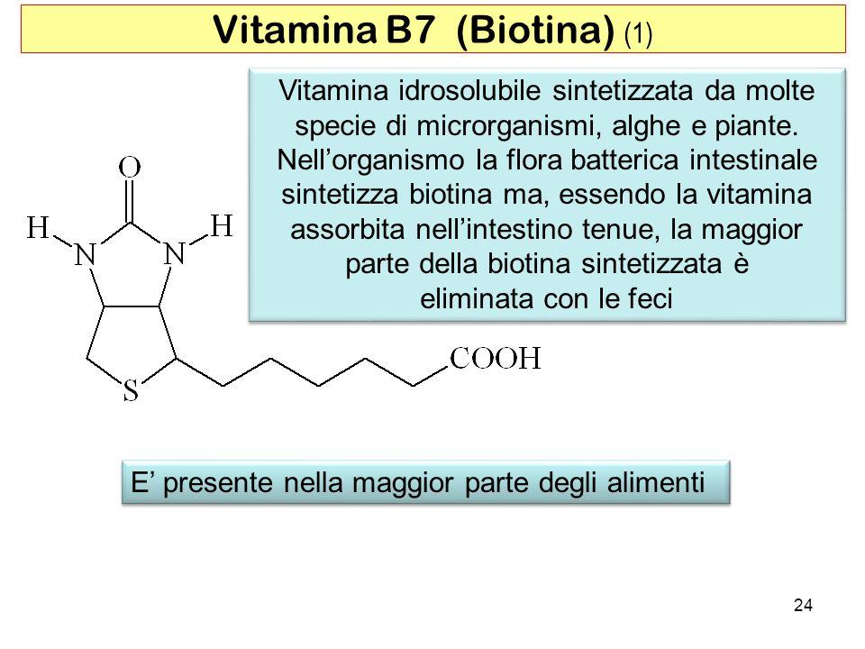 Vitamina idrosolubile sintetizzata da molte specie di microrganismi, alghe e piante. Nellorganismo la flora batterica intestinale sintetizza biotina m
