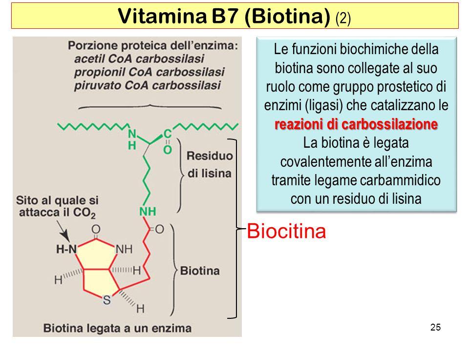 Biocitina Vitamina B7 (Biotina) (2) reazioni di carbossilazione Le funzioni biochimiche della biotina sono collegate al suo ruolo come gruppo prosteti