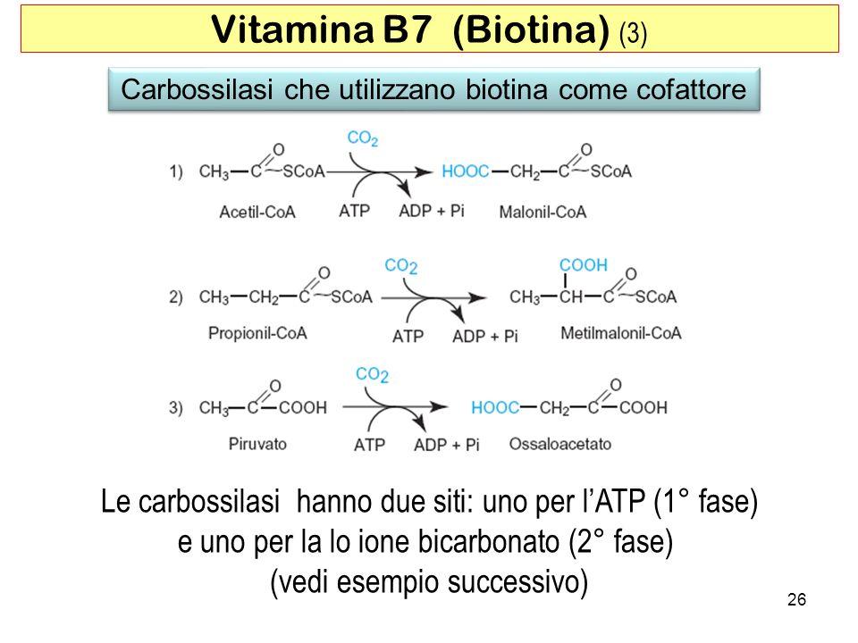 26 Vitamina B7 (Biotina) (3) Carbossilasi che utilizzano biotina come cofattore Le carbossilasi hanno due siti: uno per lATP (1° fase) e uno per la lo