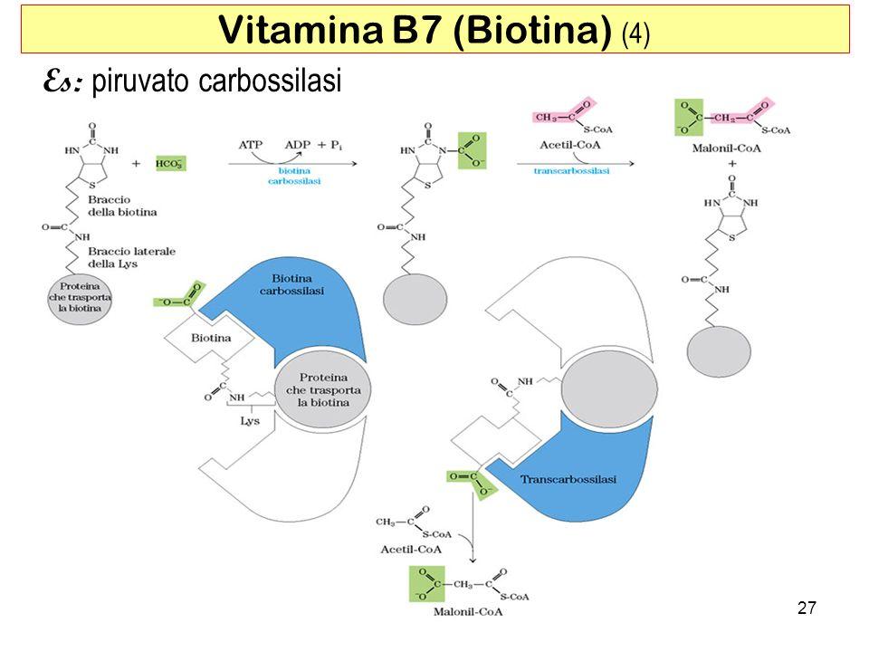 27 Vitamina B7 (Biotina) (4) Es: piruvato carbossilasi