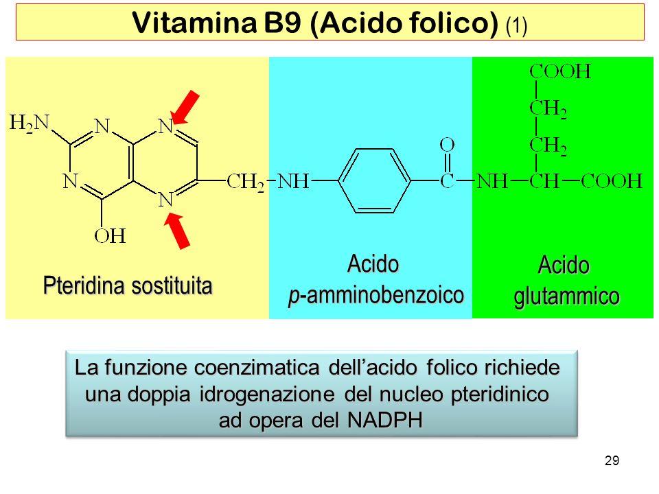 Pteridina sostituita Acido p -amminobenzoico Acidoglutammico La funzione coenzimatica dellacido folico richiede una doppia idrogenazione del nucleo pt
