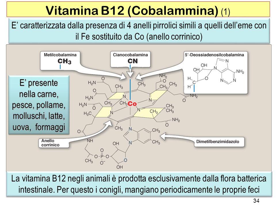 34 Vitamina B12 (Cobalammina) (1) E caratterizzata dalla presenza di 4 anelli pirrolici simili a quelli delleme con il Fe sostituito da Co (anello cor