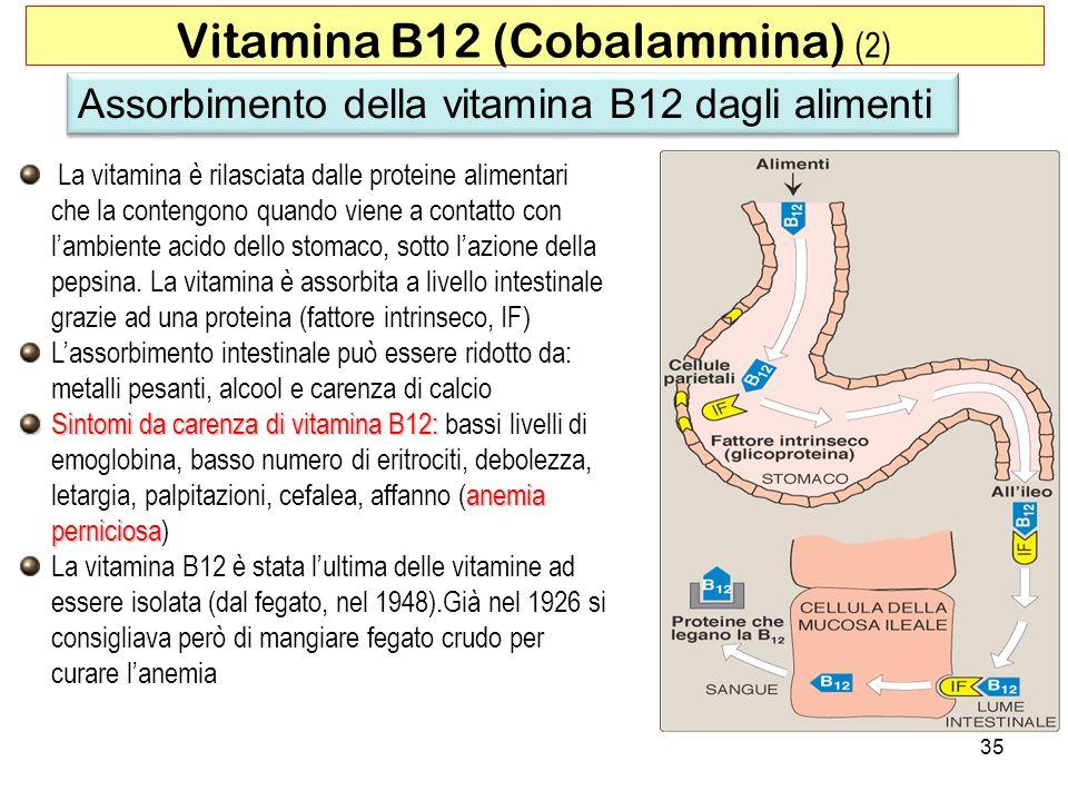 La vitamina è rilasciata dalle proteine alimentari che la contengono quando viene a contatto con lambiente acido dello stomaco, sotto lazione della pe