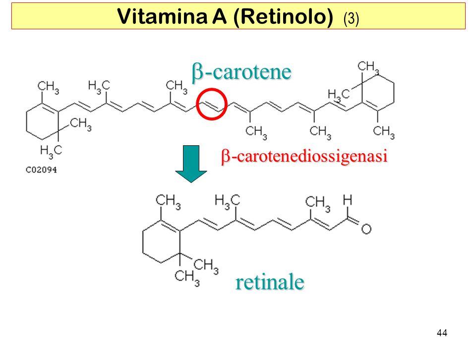 -carotene -carotene -carotenediossigenasi -carotenediossigenasi retinale 44 Vitamina A (Retinolo) (3)