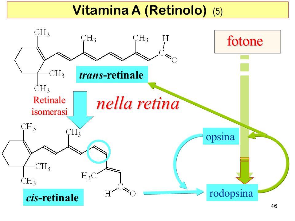 Retinaleisomerasi trans-retinale cis-retinale rodopsina opsina fotone nella retina 46 Vitamina A (Retinolo) (5)