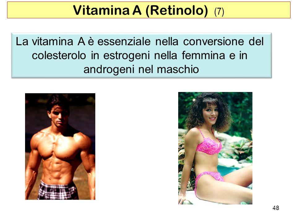 La vitamina A è essenziale nella conversione del colesterolo in estrogeni nella femmina e in androgeni nel maschio La vitamina A è essenziale nella co