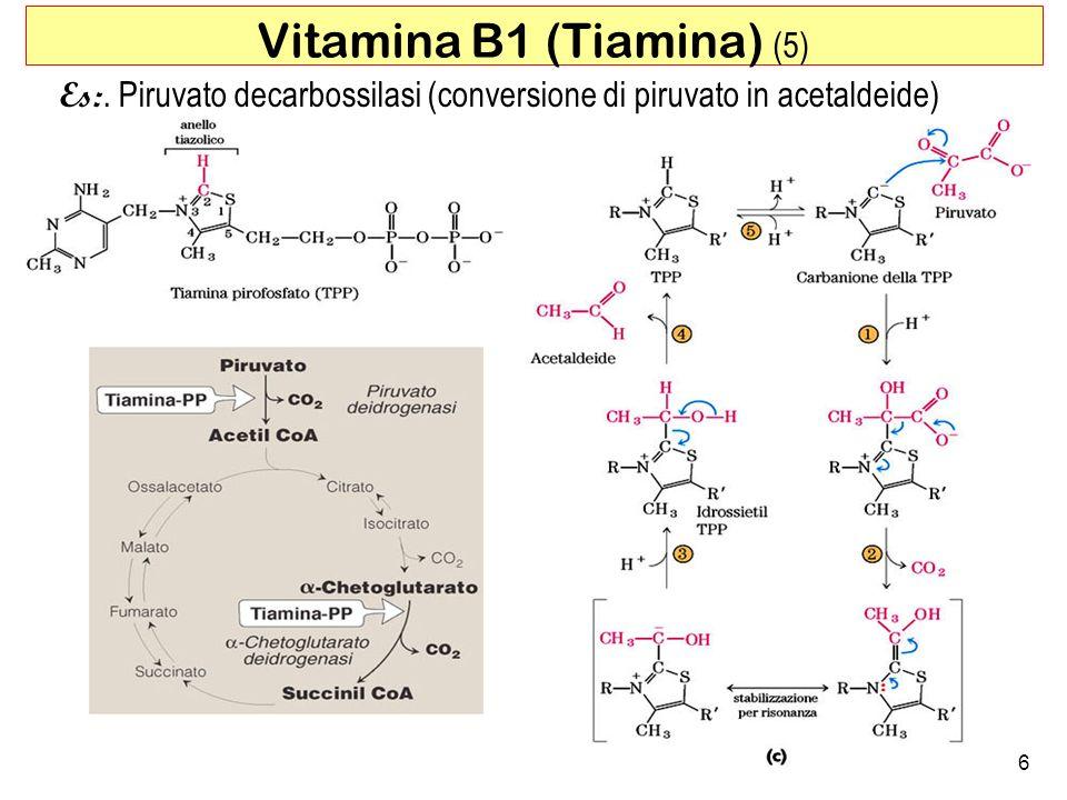 Es:. Piruvato decarbossilasi (conversione di piruvato in acetaldeide) 6 Vitamina B1 (Tiamina) (5)