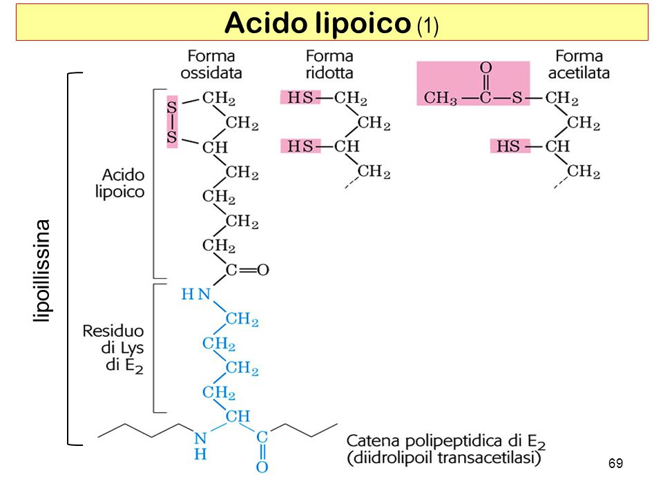 69 Acido lipoico (1) lipoillissina