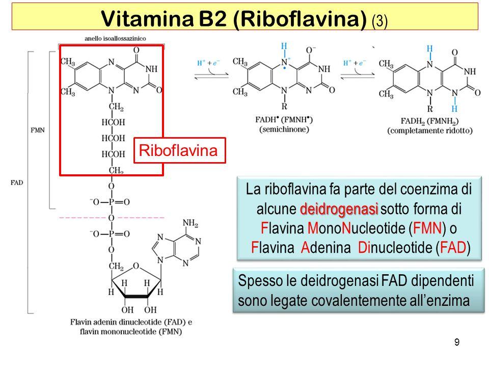 9 Vitamina B2 (Riboflavina) (3) Riboflavina deidrogenasi La riboflavina fa parte del coenzima di alcune deidrogenasi sotto forma di Flavina MonoNucleo