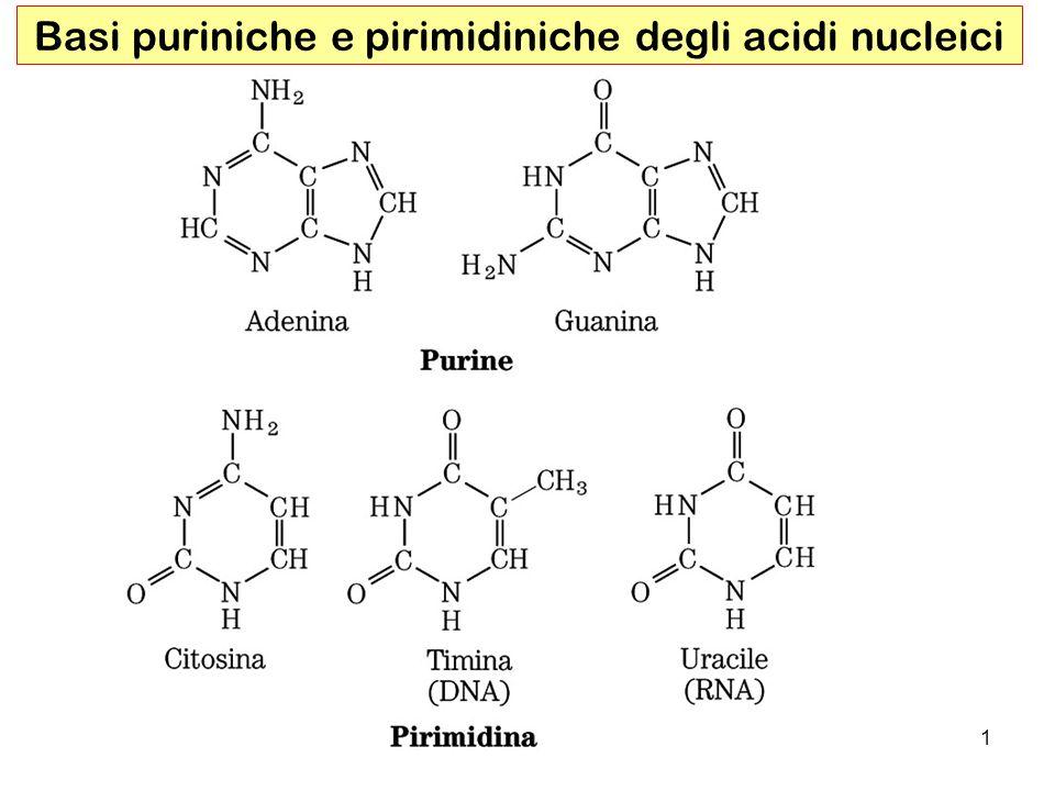 1 Basi puriniche e pirimidiniche degli acidi nucleici