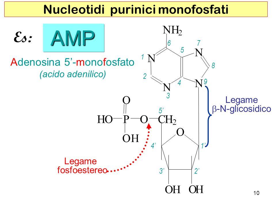 Adenosina 5-monofosfato (acido adenilico) AMP AMP Legame fosfoestereo 10 Nucleotidi purinici monofosfati Legame -N-glicosidico O H H 5 4 32 1 1 2 3 4