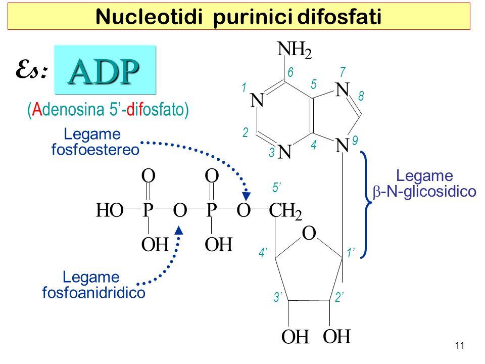 (Adenosina 5-difosfato) ADP ADP 5 4 32 1 1 2 3 4 5 67 8 9 Legame fosfoestereo Legame fosfoanidridico 11 Nucleotidi purinici difosfati Es: N N N N NH 2