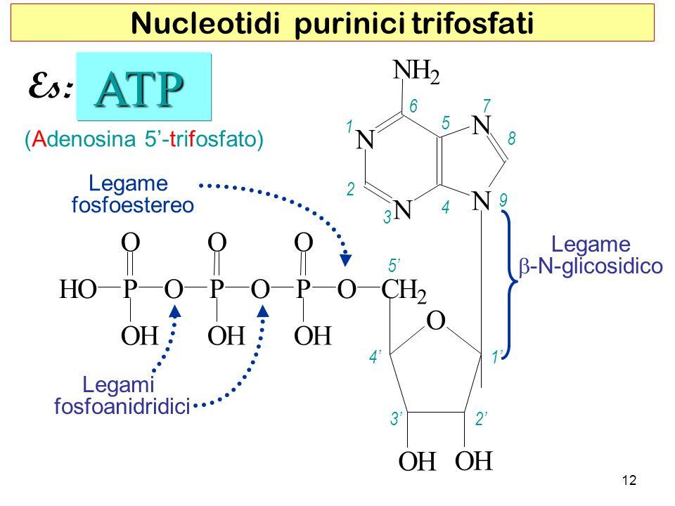 N N N N NH 2 O OH OH CH 2 OP O O OH P O O OH P O HO OH (Adenosina 5-trifosfato) ATP ATP 5 4 32 1 1 2 3 4 5 67 8 9 Legamifosfoanidridici Legamefosfoest