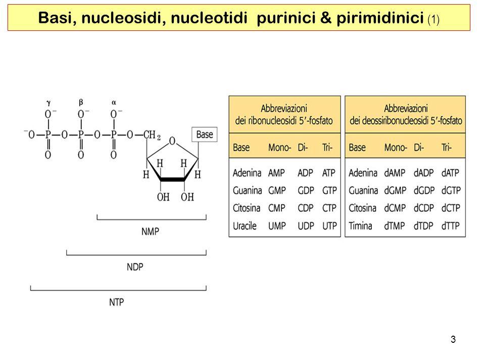 3 Basi, nucleosidi, nucleotidi purinici & pirimidinici (1)