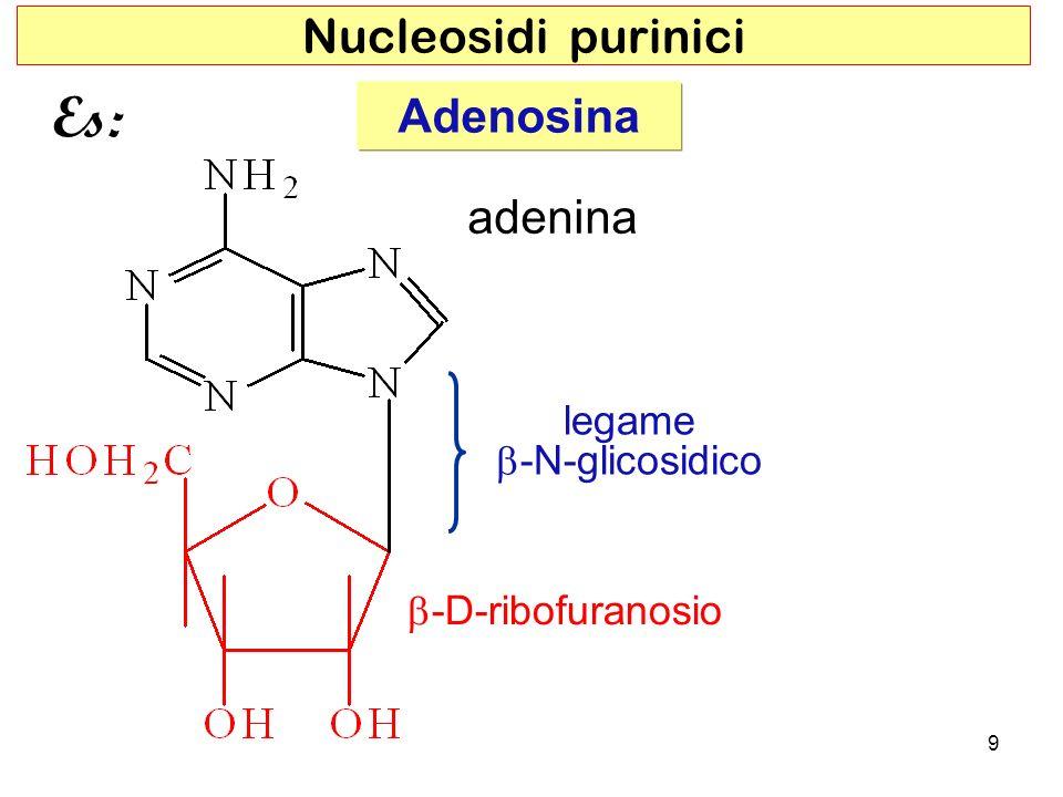 Adenosina adenina legame -N-glicosidico 9 Nucleosidi purinici -D-ribofuranosio Es: