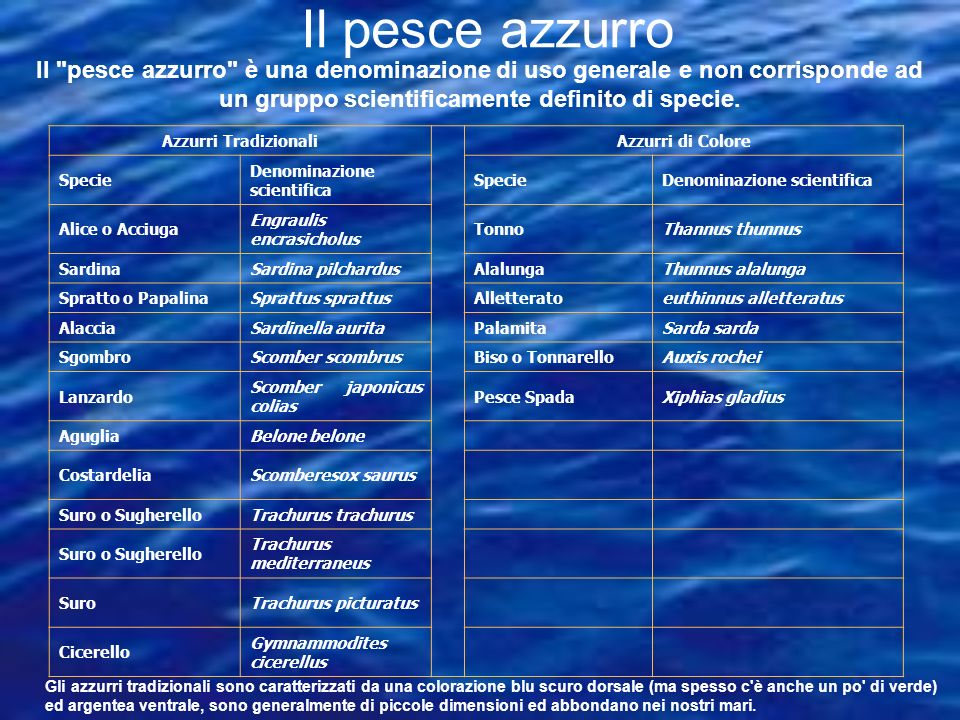 Azzurri Tradizionali Azzurri di Colore Specie Denominazione scientifica SpecieDenominazione scientifica Alice o Acciuga Engraulis encrasicholus TonnoT
