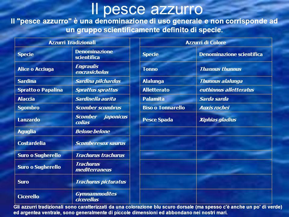 Le specie più abbondanti e pescate in tutti i mari italiani sono: l alice, La sardina lo sgombro.