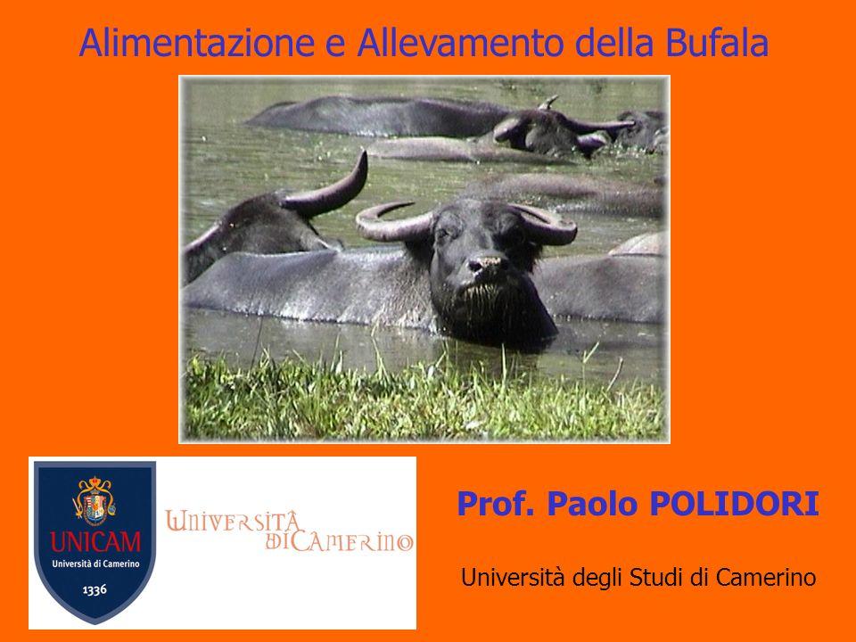 Alimentazione e Allevamento della Bufala Prof. Paolo POLIDORI Università degli Studi di Camerino