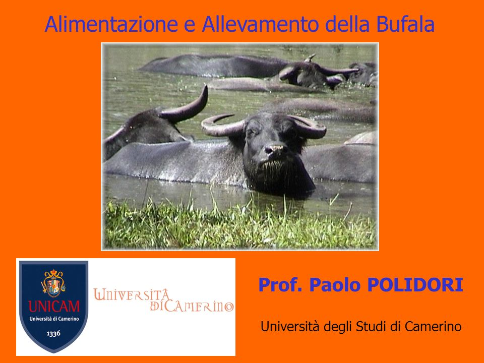 Categorie Bufali Macellati (2002) Capi macellati Peso Medio (kg) Resa % Vitelli601247,954,4 Annutoli/e3.711471,951,8 Bufale3.819550,947,7
