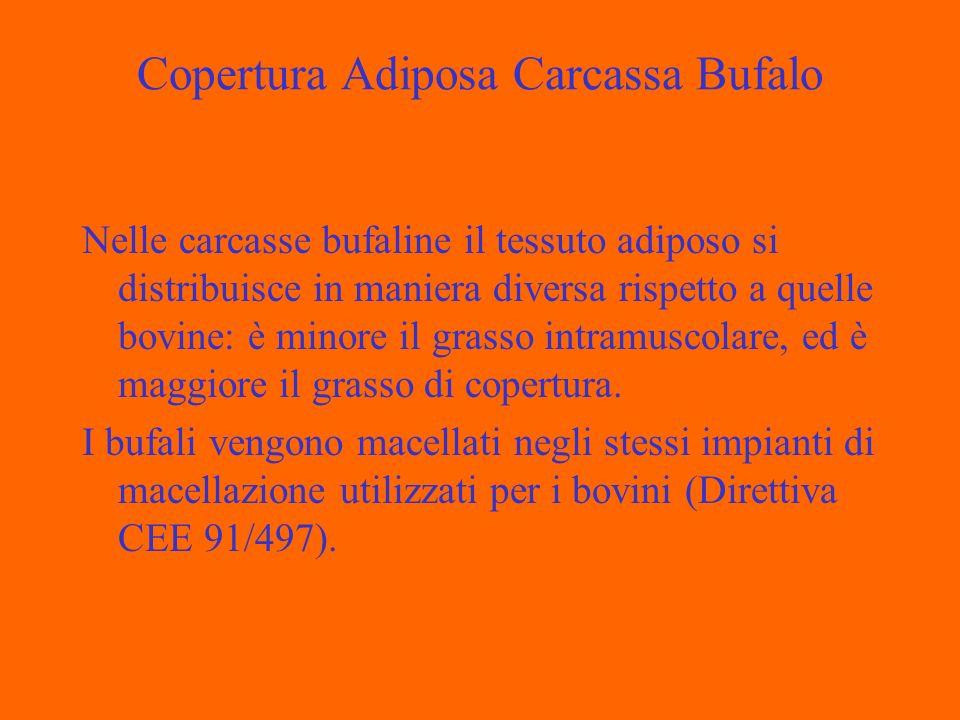 Copertura Adiposa Carcassa Bufalo Nelle carcasse bufaline il tessuto adiposo si distribuisce in maniera diversa rispetto a quelle bovine: è minore il grasso intramuscolare, ed è maggiore il grasso di copertura.