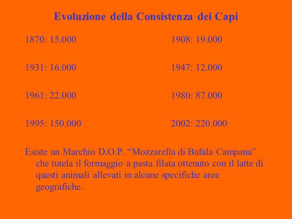 Evoluzione della Consistenza dei Capi 1870: 15.0001908: 19.000 1931: 16.0001947: 12.000 1961: 22.0001980: 87.000 1995: 150.0002002: 220.000 Esiste un Marchio D.O.P.