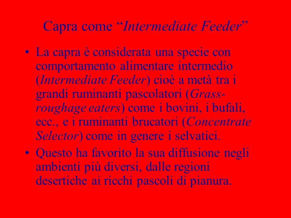 Capra come Intermediate Feeder La capra è considerata una specie con comportamento alimentare intermedio (Intermediate Feeder) cioè a metà tra i grand