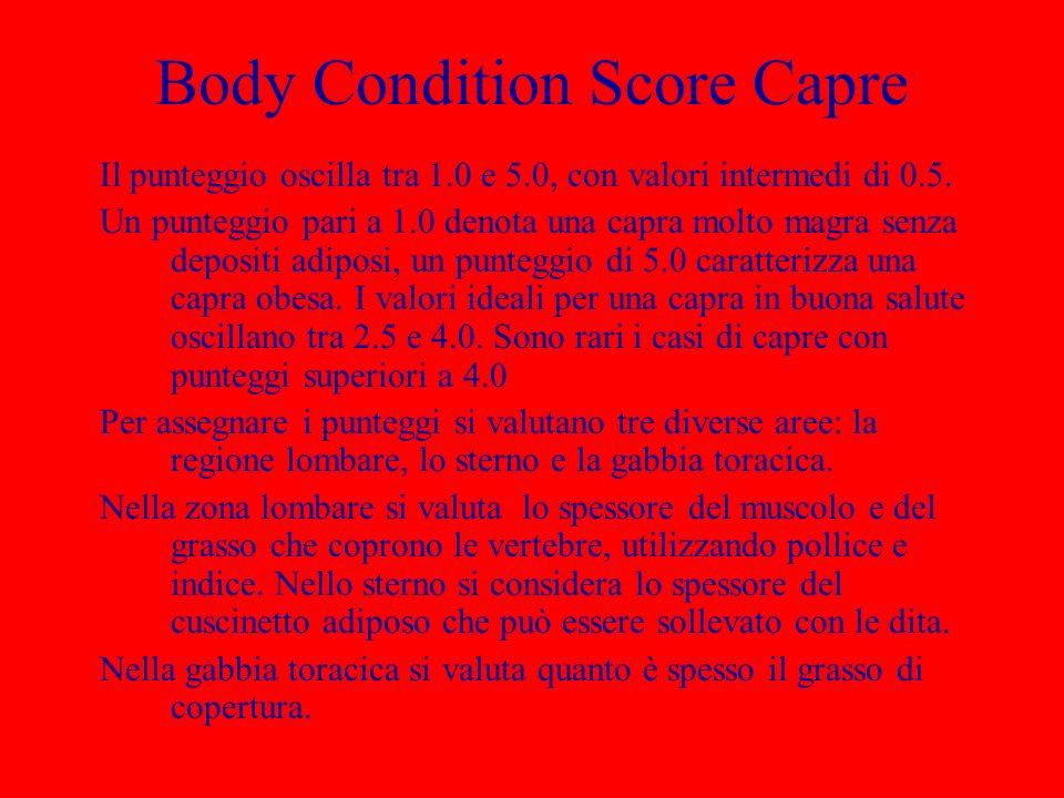 Body Condition Score Capre Il punteggio oscilla tra 1.0 e 5.0, con valori intermedi di 0.5. Un punteggio pari a 1.0 denota una capra molto magra senza