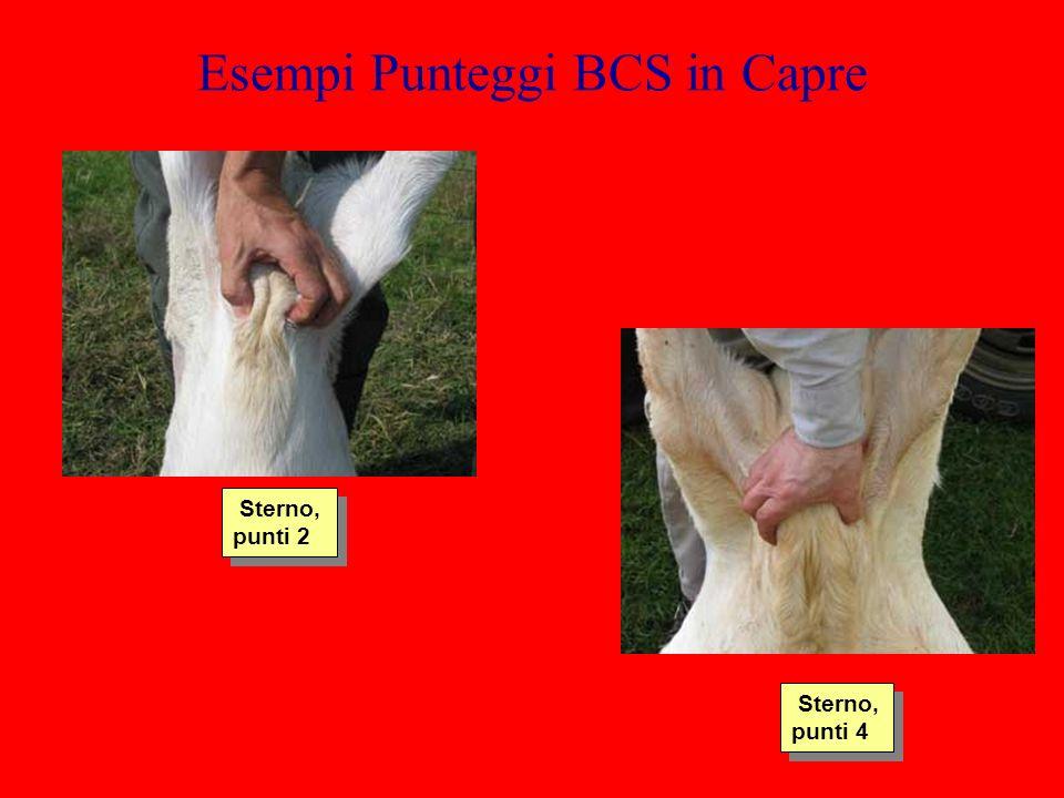 Esempi Punteggi BCS in Capre Sterno, punti 2 Sterno, punti 4