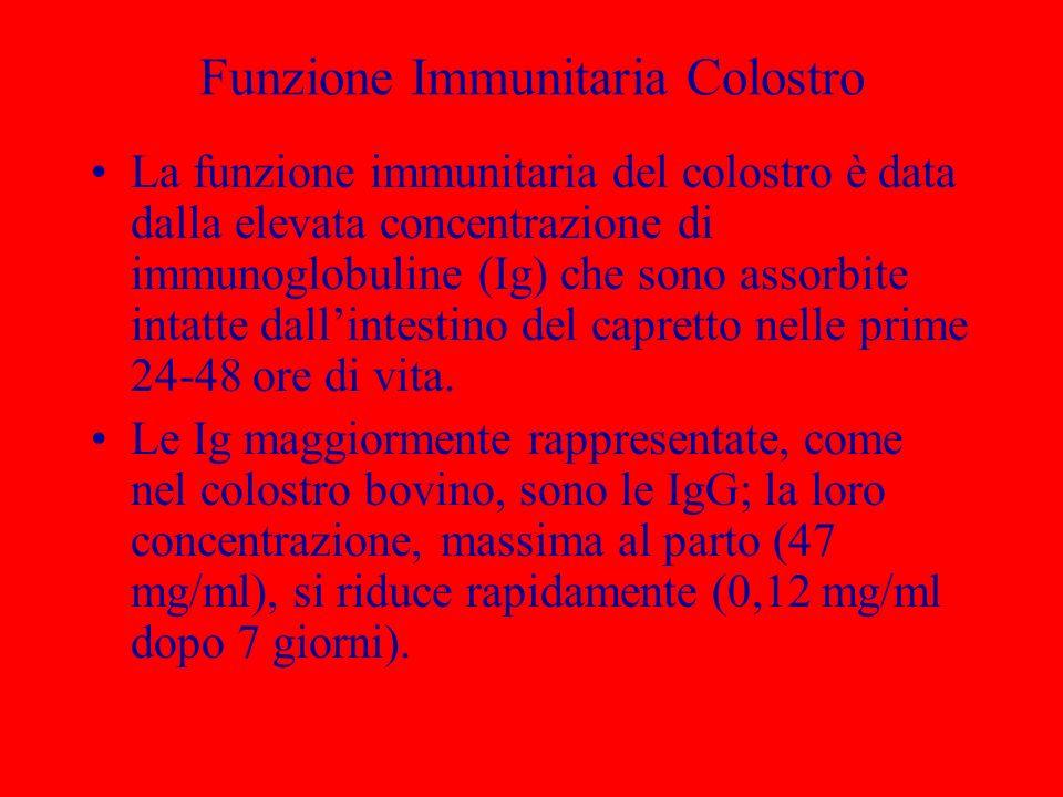Funzione Immunitaria Colostro La funzione immunitaria del colostro è data dalla elevata concentrazione di immunoglobuline (Ig) che sono assorbite inta