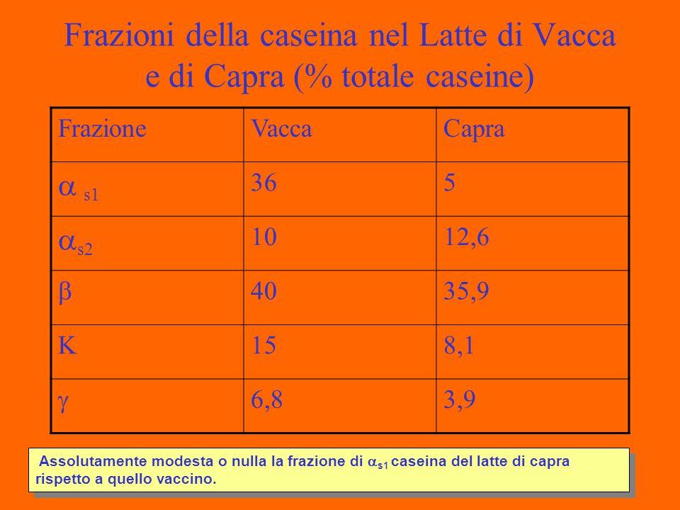 Frazioni della caseina nel Latte di Vacca e di Capra (% totale caseine) FrazioneVaccaCapra s1 365 s2 1012,6 4035,9 K158,1 6,83,9 Assolutamente modesta o nulla la frazione di s1 caseina del latte di capra rispetto a quello vaccino.