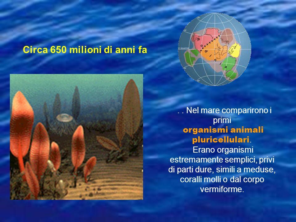 ... Nel mare comparirono i primi organismi animali pluricellulari. Erano organismi estremamente semplici, privi di parti dure, simili a meduse, corall