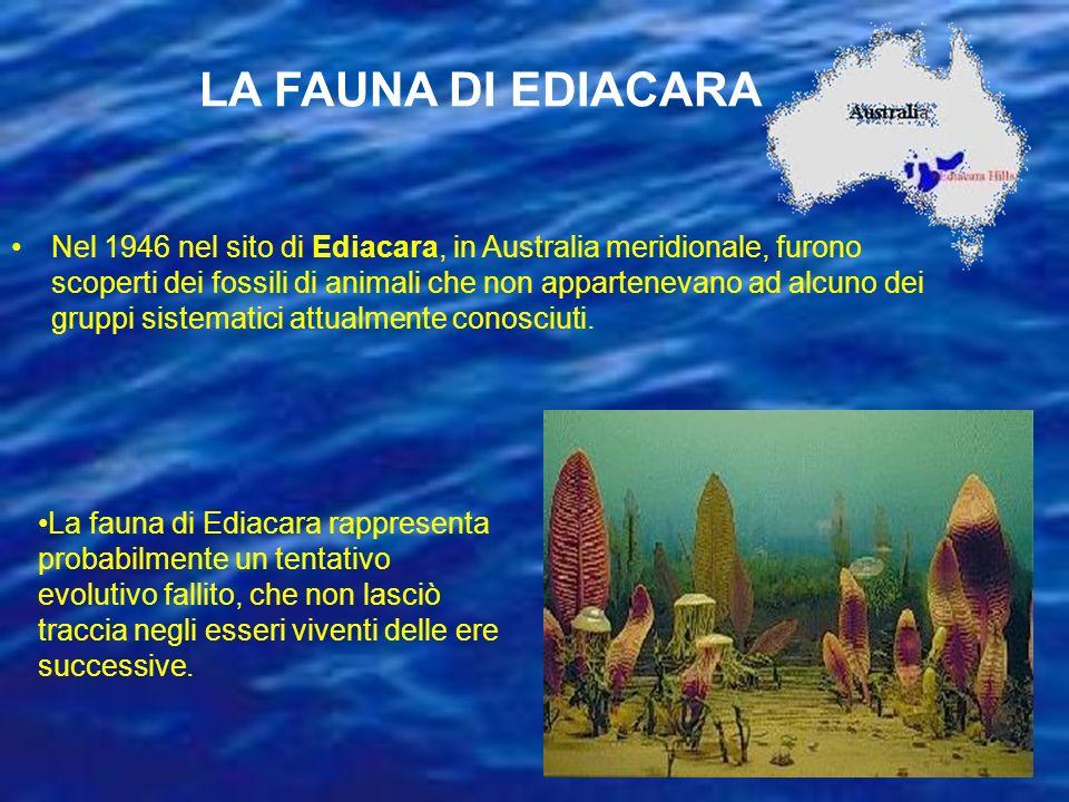 LA FAUNA DI EDIACARA Nel 1946 nel sito di Ediacara, in Australia meridionale, furono scoperti dei fossili di animali che non appartenevano ad alcuno d