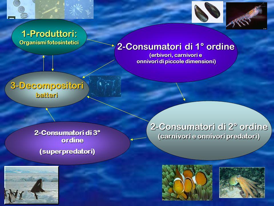 1-Produttori: Organismi fotosintetici 2-Consumatori di 1° ordine (erbivori, carnivori e onnivori di piccole dimensioni) onnivori di piccole dimensioni