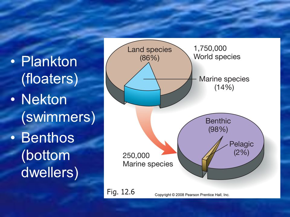Plankton (floaters) Nekton (swimmers) Benthos (bottom dwellers) Fig. 12.6